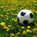 Soccer ball in field of dandelions