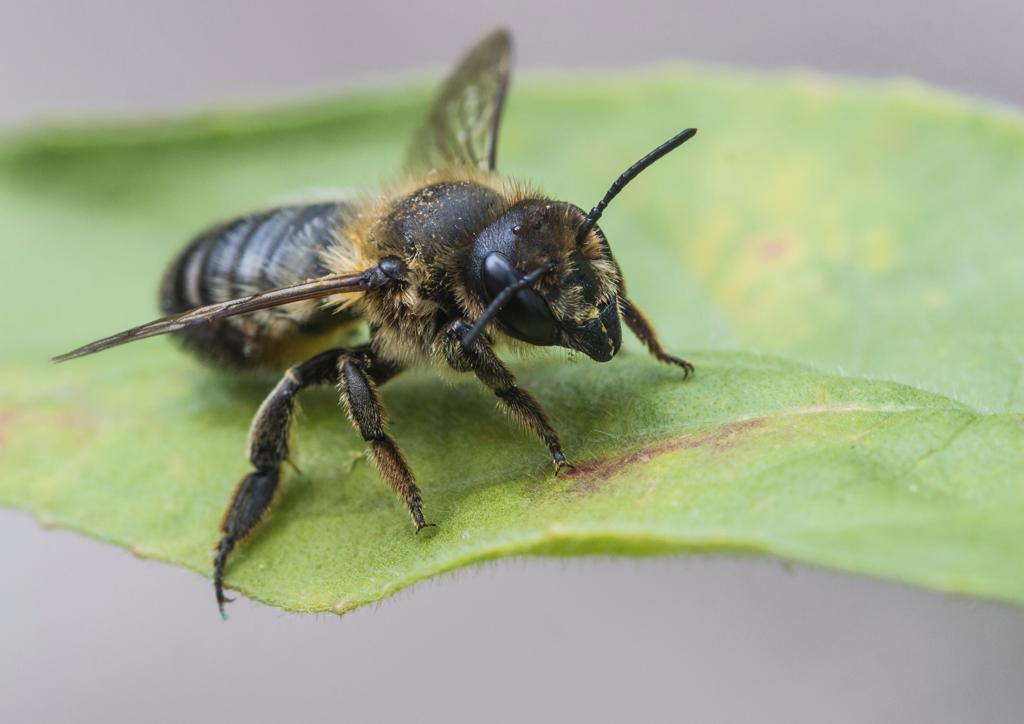 What Kind Of Bee Is It