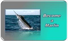 Become a Marlin