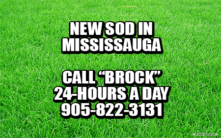 New Sod In Mississauga by Brock's Landscape - 905.822.3131