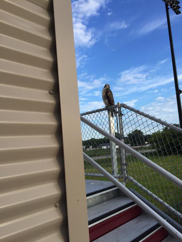 Hawk watches over Hawk Practice