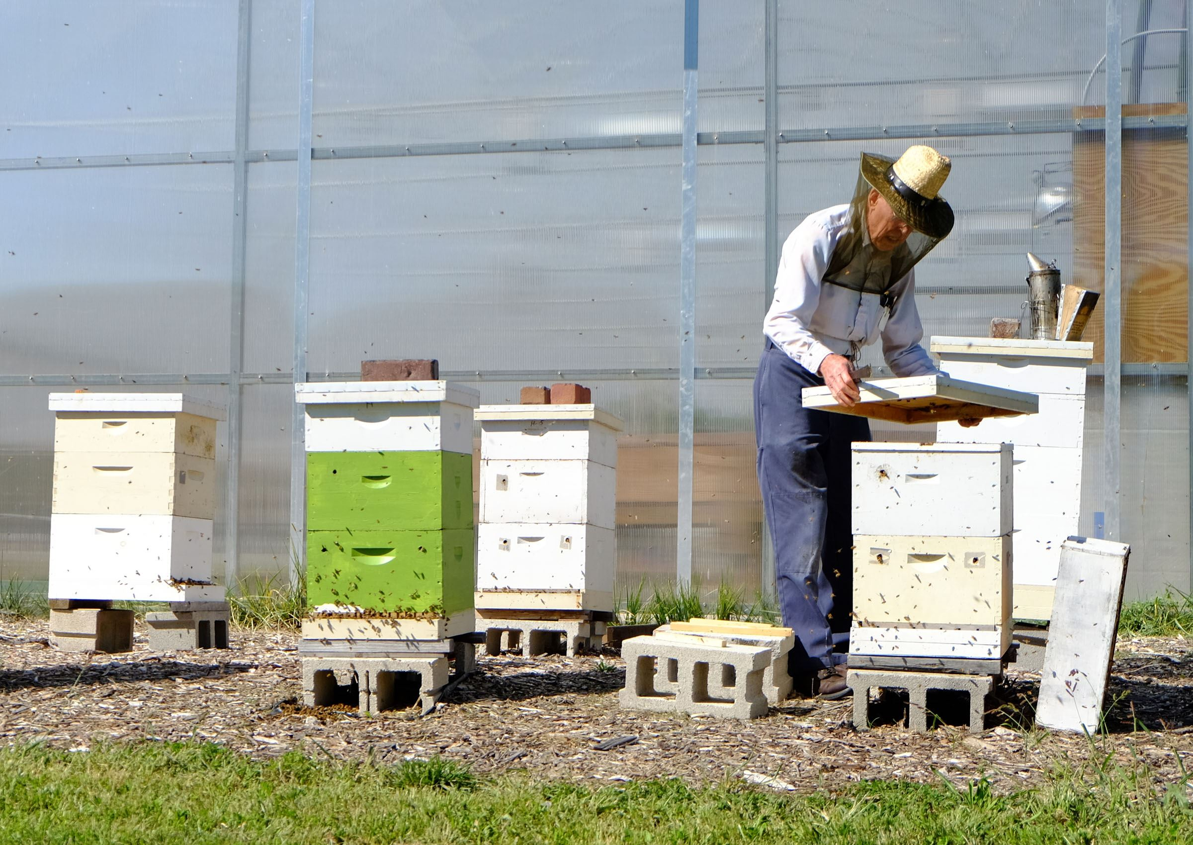 Haircut coupons toledo ohio - Horace Huse Of Toledo Is A Volunteer Beekeeper For The Bees In The Hives At The Toledo Grows Headquarters Ononeida Street In Downtown Toledo Ohio On