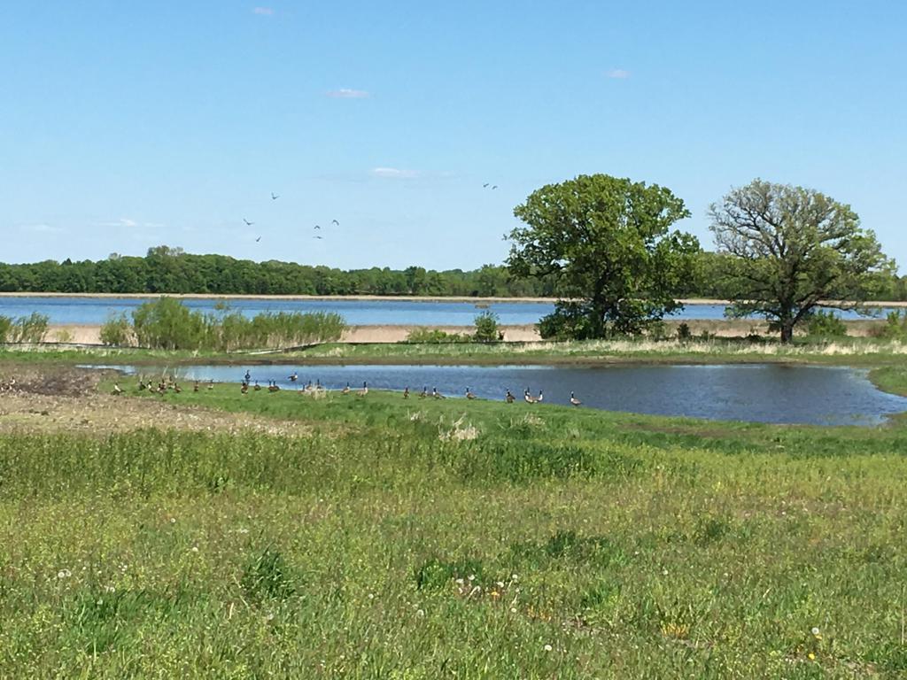 Tiger Marsh WMA Restored Wetland