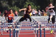 Warrior hurdles large small